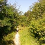 Sentiero Monte Calbarina Arquà Petrarca